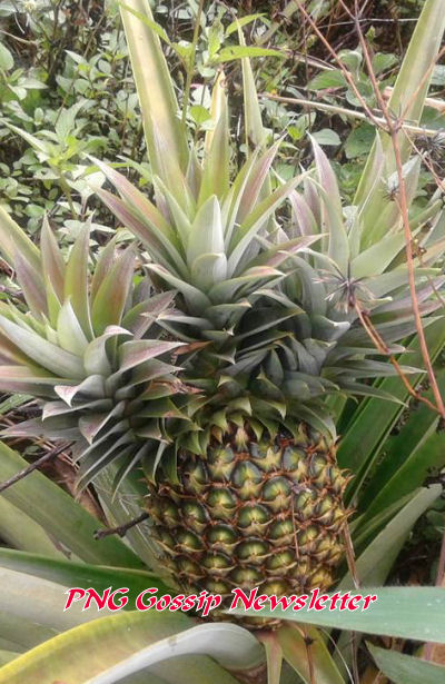 Pineapple from near Goroka